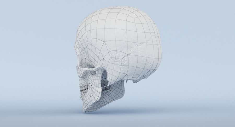 Skull Anatomy royalty-free 3d model - Preview no. 46