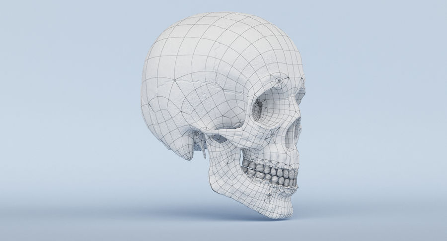 Skull Anatomy royalty-free 3d model - Preview no. 40