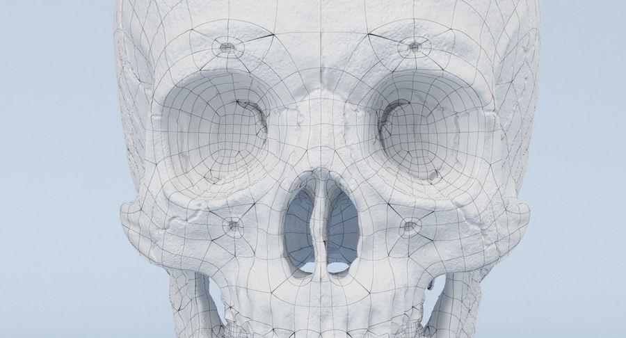 Anatomie du crâne royalty-free 3d model - Preview no. 29