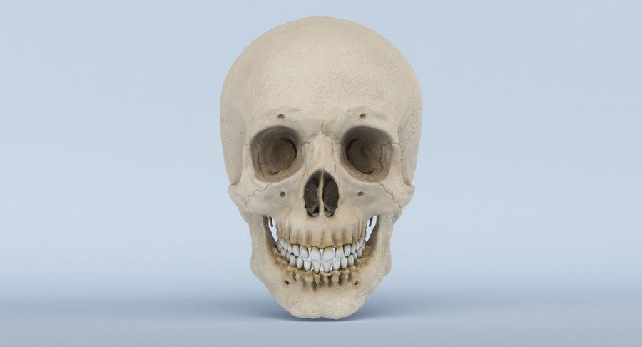 Anatomie du crâne royalty-free 3d model - Preview no. 2