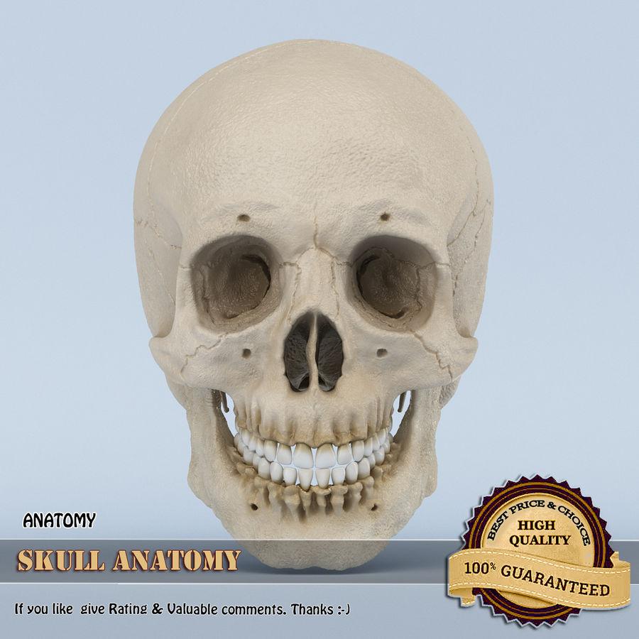 Anatomie du crâne royalty-free 3d model - Preview no. 1