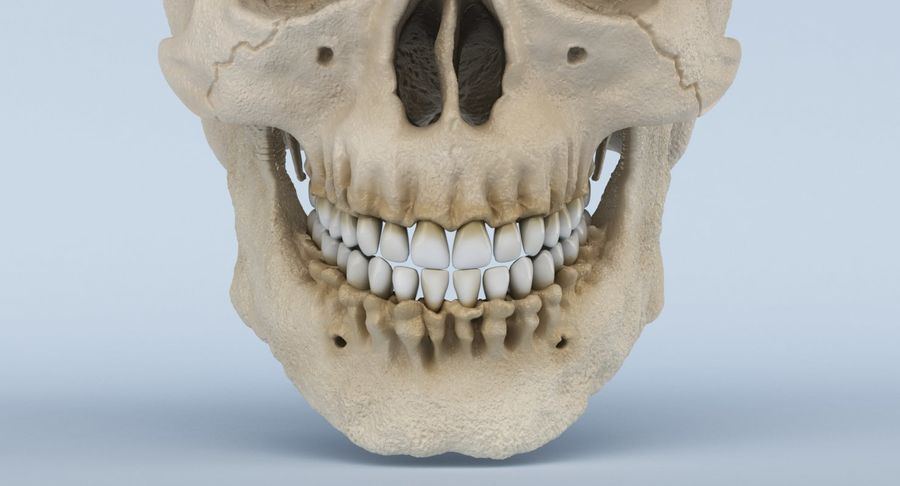 Anatomie du crâne royalty-free 3d model - Preview no. 19
