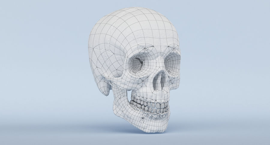 Skull Anatomy royalty-free 3d model - Preview no. 39