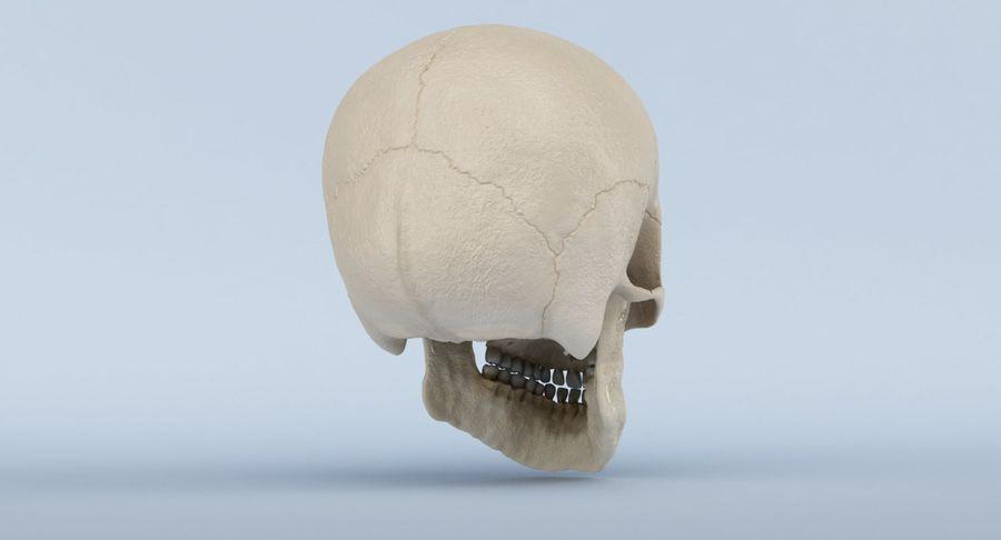 Anatomie du crâne royalty-free 3d model - Preview no. 7