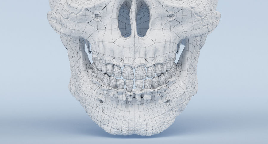 Skull Anatomy royalty-free 3d model - Preview no. 31