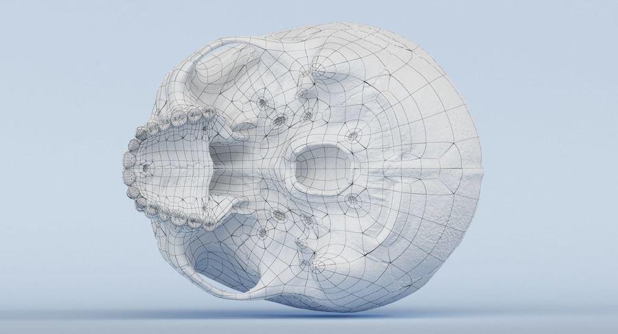 Anatomie du crâne royalty-free 3d model - Preview no. 26