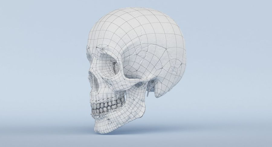 Anatomie du crâne royalty-free 3d model - Preview no. 48