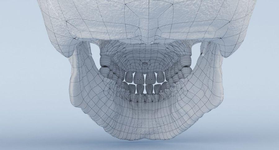 Anatomie du crâne royalty-free 3d model - Preview no. 35