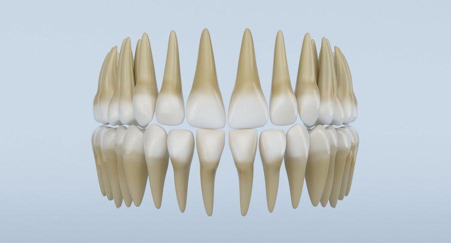 Anatomie du crâne royalty-free 3d model - Preview no. 20