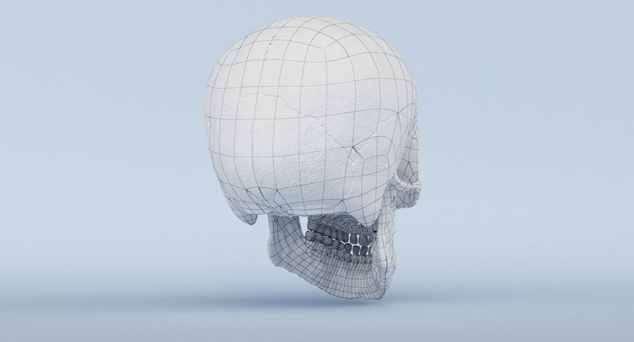 Skull Anatomy royalty-free 3d model - Preview no. 43