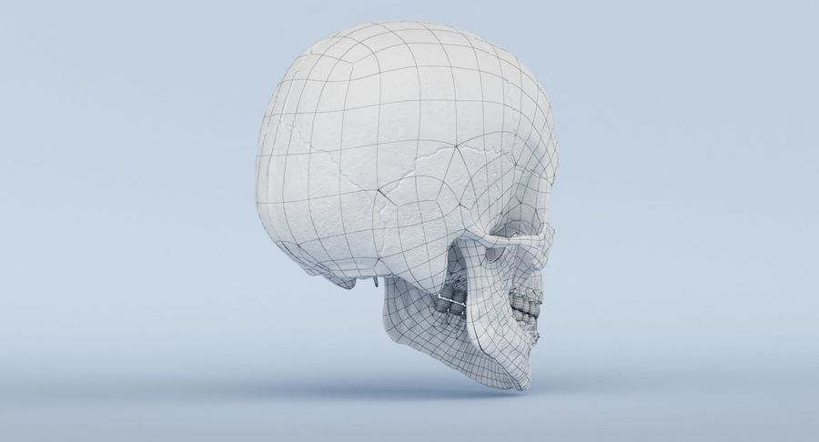 Anatomie du crâne royalty-free 3d model - Preview no. 42