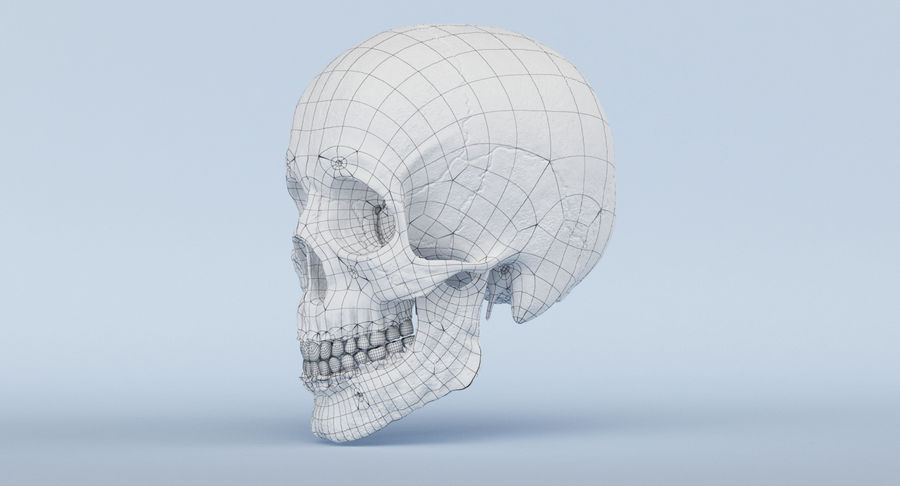 Skull Anatomy royalty-free 3d model - Preview no. 48