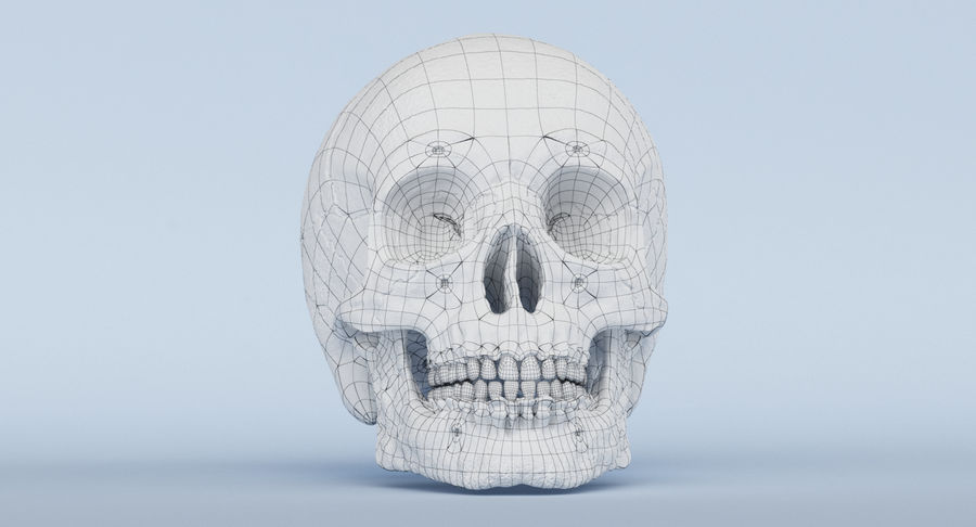 Skull Anatomy royalty-free 3d model - Preview no. 37