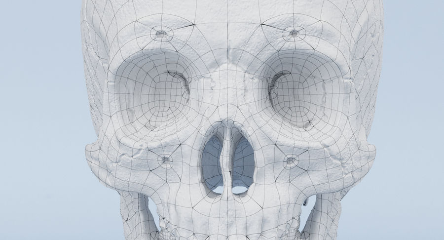 Skull Anatomy royalty-free 3d model - Preview no. 29