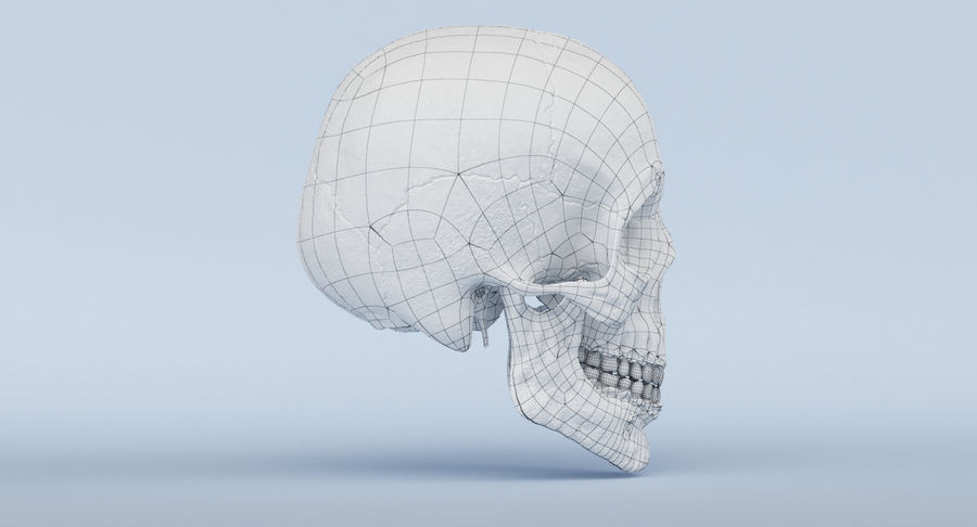 Skull Anatomy royalty-free 3d model - Preview no. 41