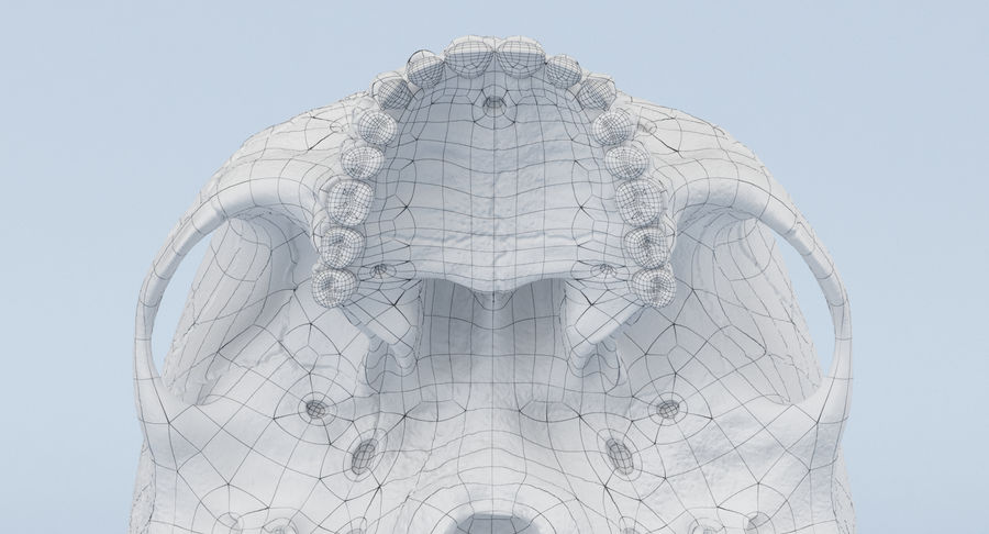 Skull Anatomy royalty-free 3d model - Preview no. 34