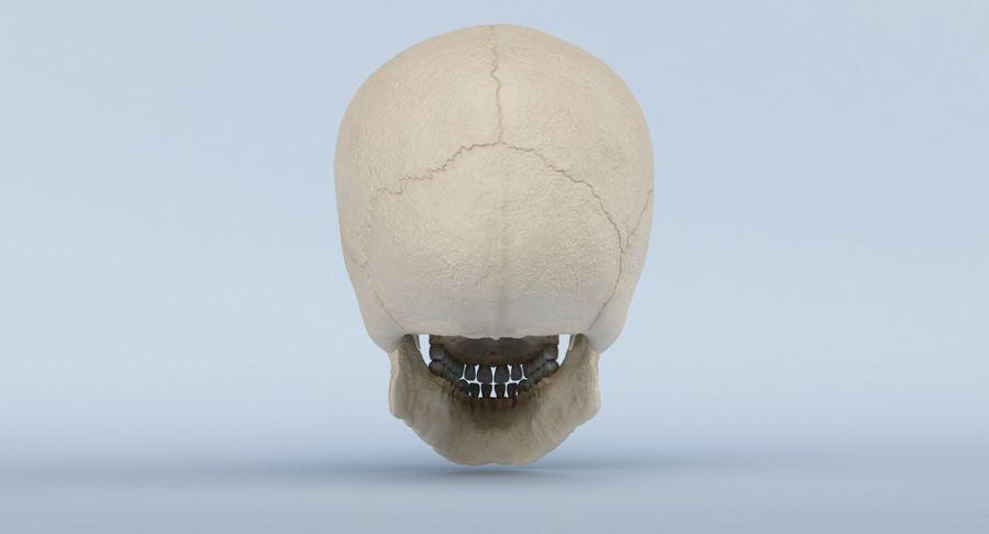 Anatomie du crâne royalty-free 3d model - Preview no. 8