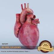 Anatomie cardiaque 3d model