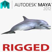 Maya için Dolphin 3d model