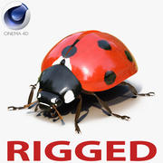 Coccinella truccata per Cinema 4D 3d model