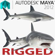 Caribbean Reef Shark Rigged for Maya 3d model