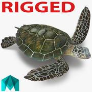 Морская черепаха, приспособленная для майя 3d model