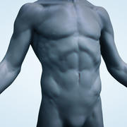 男性の胴体 3d model