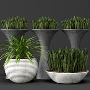 Rośliny doniczkowe 3d model
