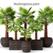coleção de palmeiras 3d model