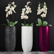 Orquídea 7 3d model