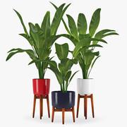 Bananowa palma 3d model