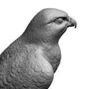 Modelo 3D pájaro halcón forma básica modelo 3d