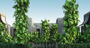 15 monstera 3d model
