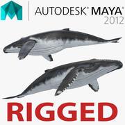 마야 용 혹등 고래 3d model