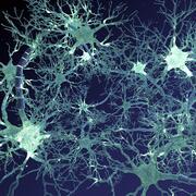 Neural Network 3d model