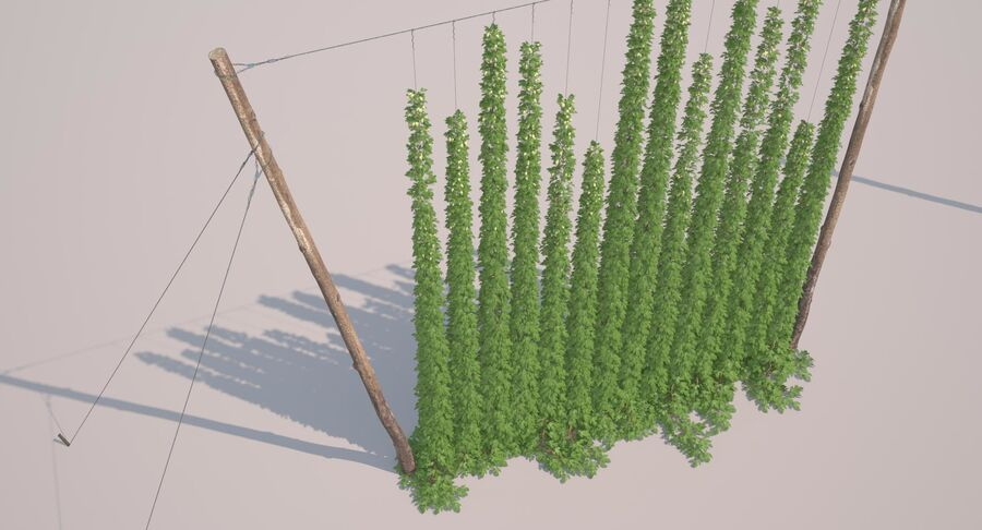 Hop Yard (1) royalty-free 3d model - Preview no. 34