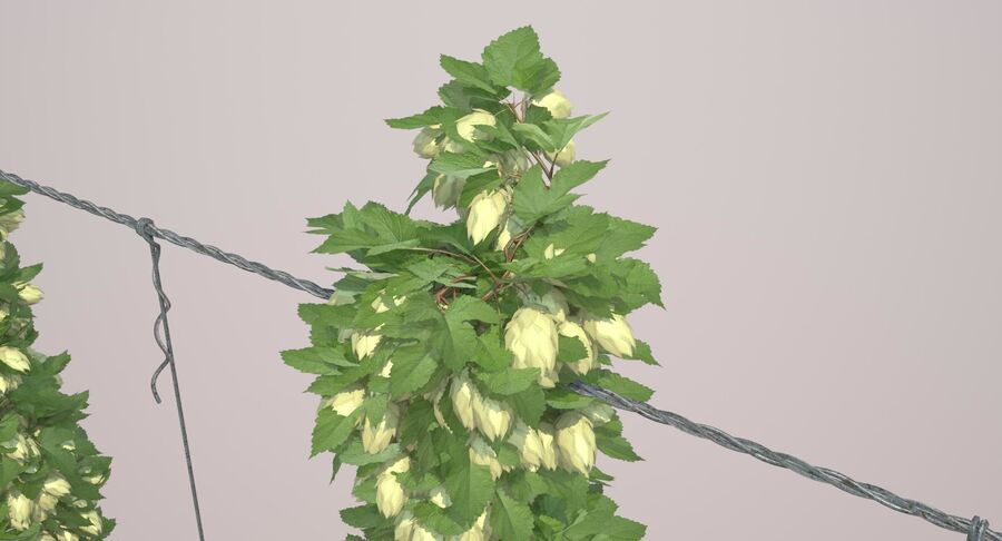 Hop Yard (1) royalty-free 3d model - Preview no. 46
