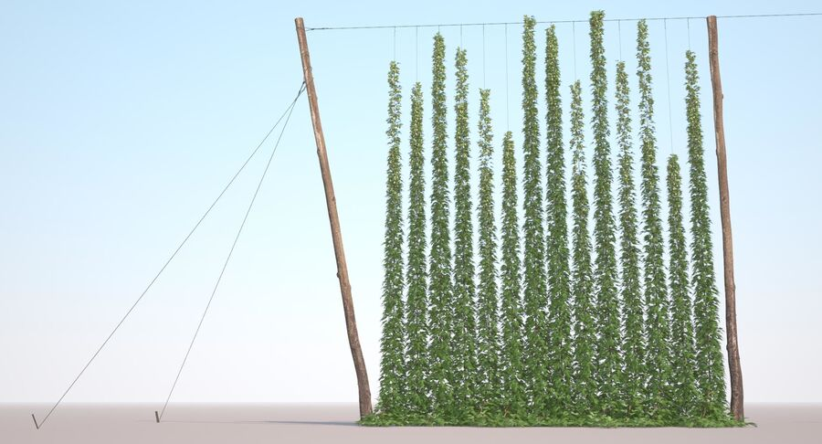 Hop Yard (1) royalty-free 3d model - Preview no. 22