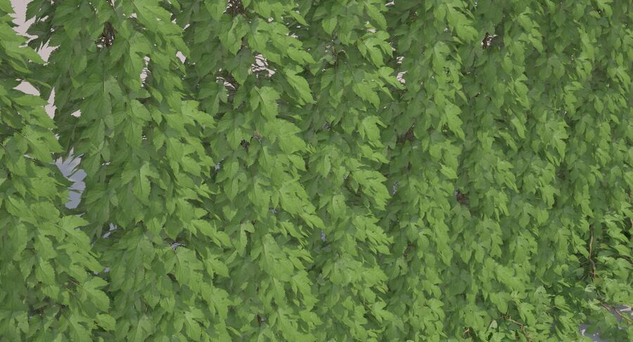 Hop Yard (1) royalty-free 3d model - Preview no. 20