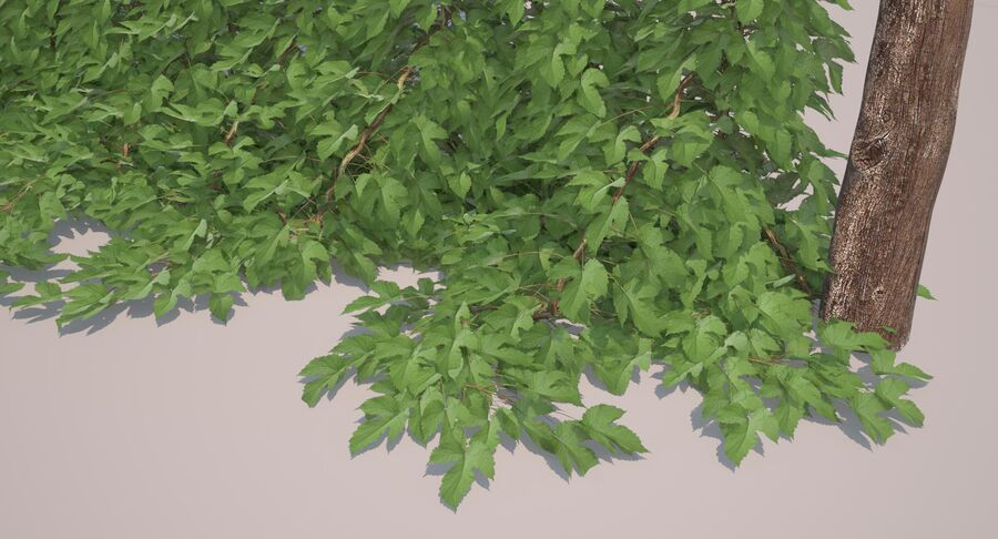 Hop Yard (1) royalty-free 3d model - Preview no. 40