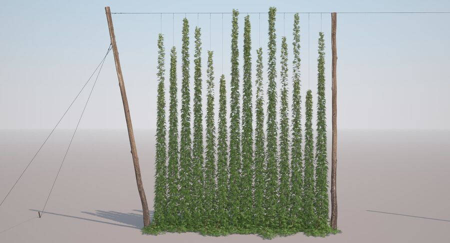 Hop Yard (1) royalty-free 3d model - Preview no. 3