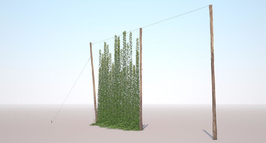Hop Yard (1) royalty-free 3d model - Preview no. 10