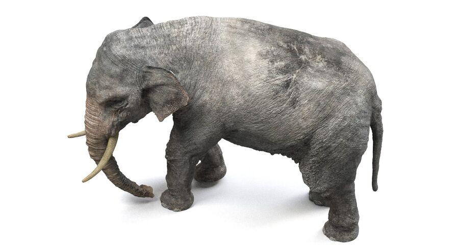 Éléphant d'Asie (gréé) royalty-free 3d model - Preview no. 9