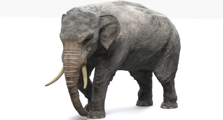 Éléphant d'Asie (gréé) royalty-free 3d model - Preview no. 8