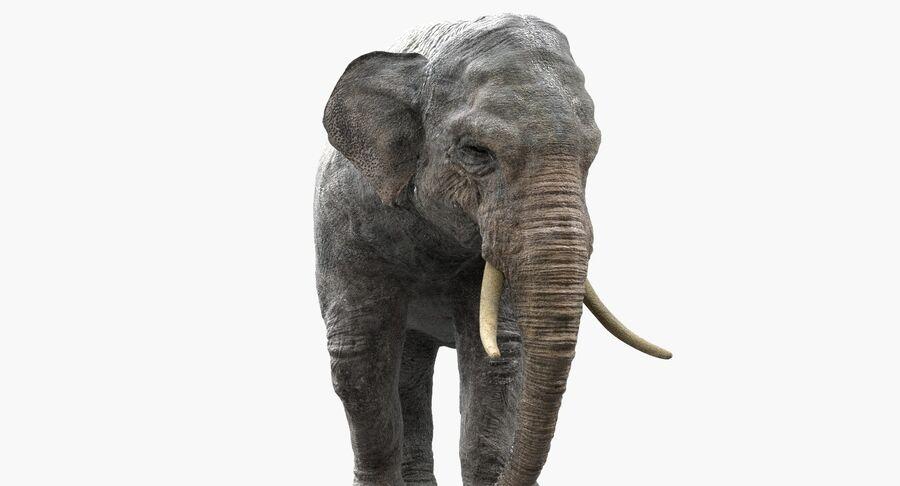 Éléphant d'Asie (gréé) royalty-free 3d model - Preview no. 15