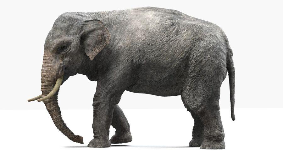 Éléphant d'Asie (gréé) royalty-free 3d model - Preview no. 7
