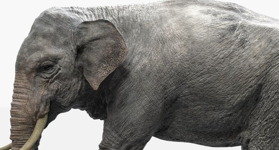 Éléphant d'Asie (gréé) royalty-free 3d model - Preview no. 5