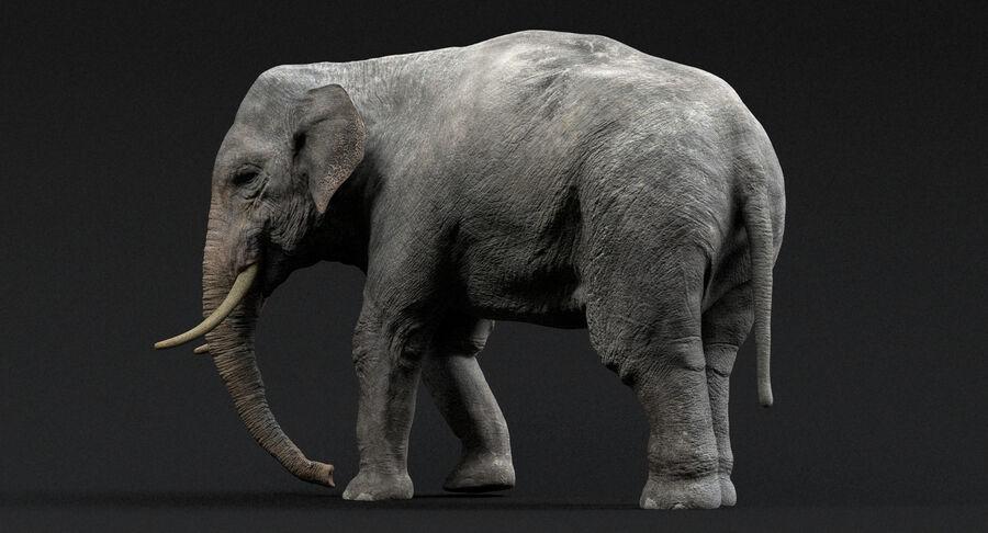 Éléphant d'Asie (gréé) royalty-free 3d model - Preview no. 3