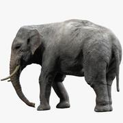 Éléphant d'Asie (gréé) 3d model