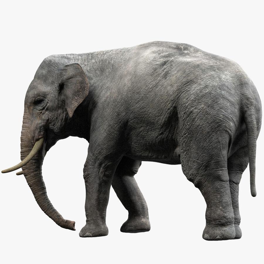 Éléphant d'Asie (gréé) royalty-free 3d model - Preview no. 1